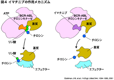 BCR-ABL BCR-ABL チロシンキナーゼ... 慢性骨髄性白血病では、白血病細胞にフィラ